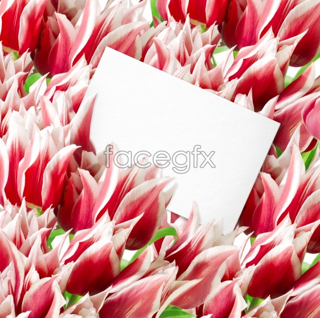 Pink flower card HD pictures