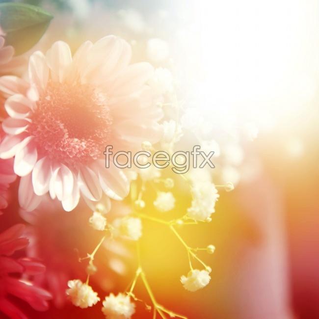 Beautiful Chrysanthemum picture