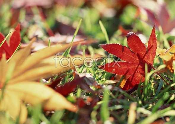Flowers close-up 1177