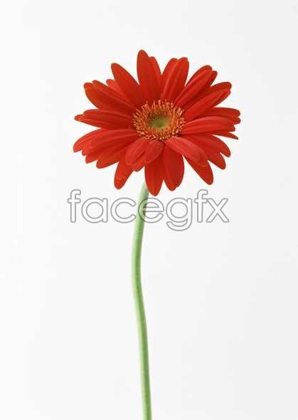 Flowers close-up 1356
