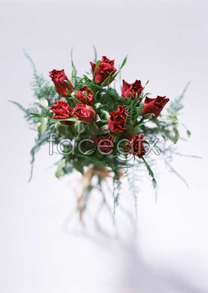 Flowers close-up 1757