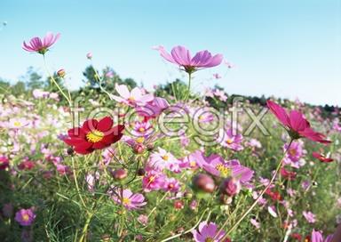 Flowers close-up 2,077