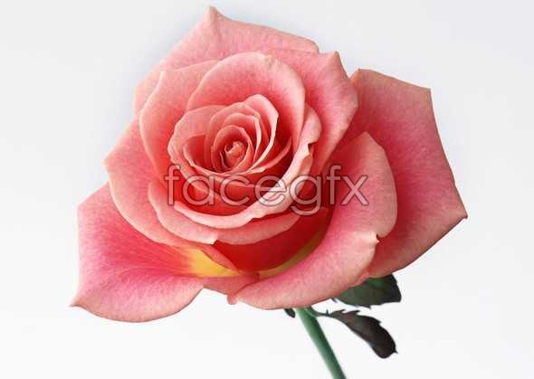 Flowers close-up 394
