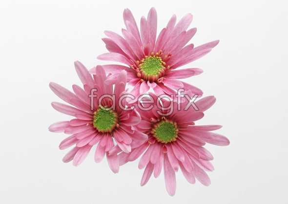 Flowers close-up 471