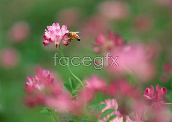 Flowers close-up 610
