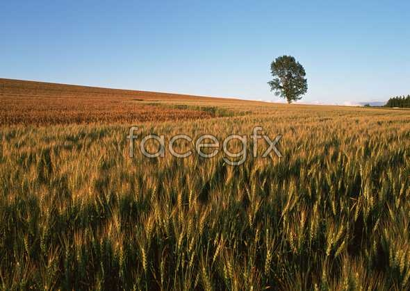 Idyllic country 106