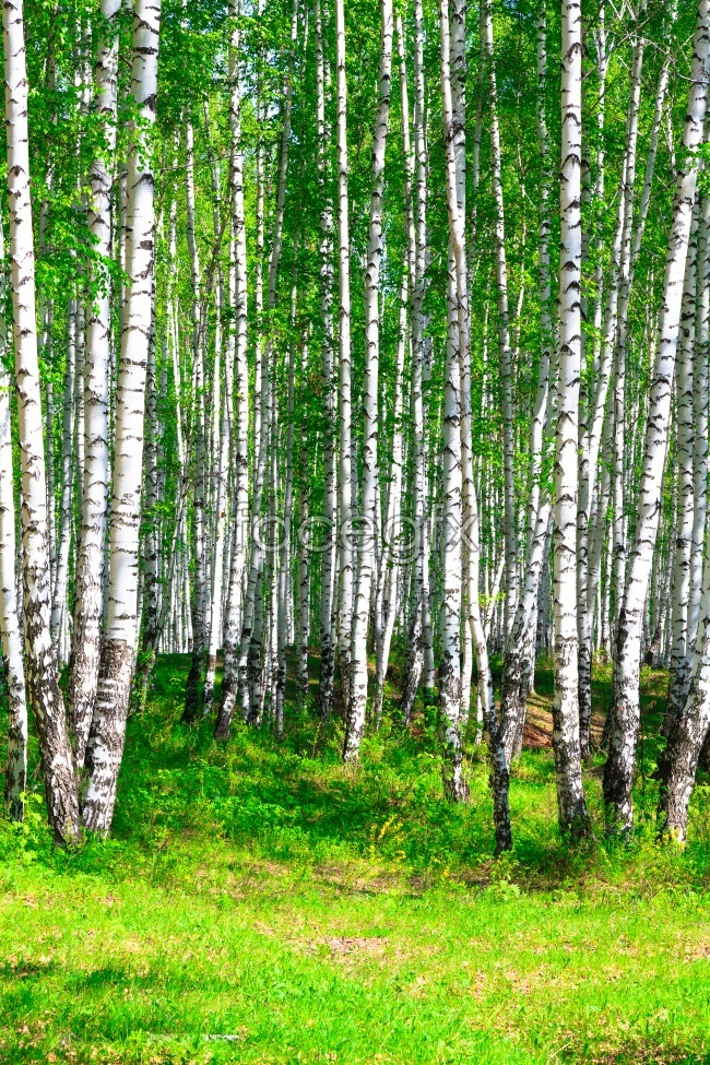 Thick forest picture