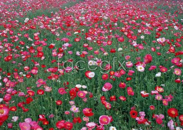 Thousands of flowers 575