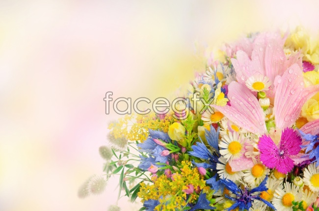 Beautiful fresh flowers pho