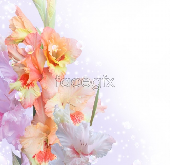 Flowers bouquets of beautiful pictures