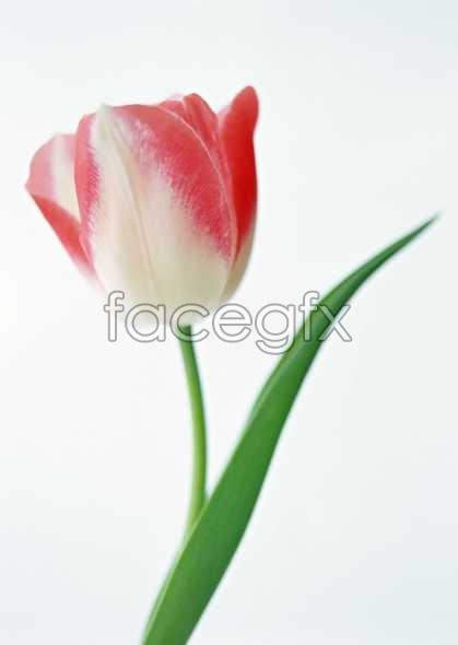 Flowers close-up 1331