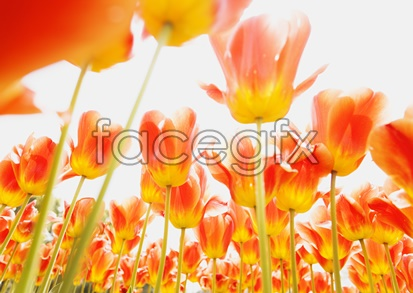 Flowers close-up 2042