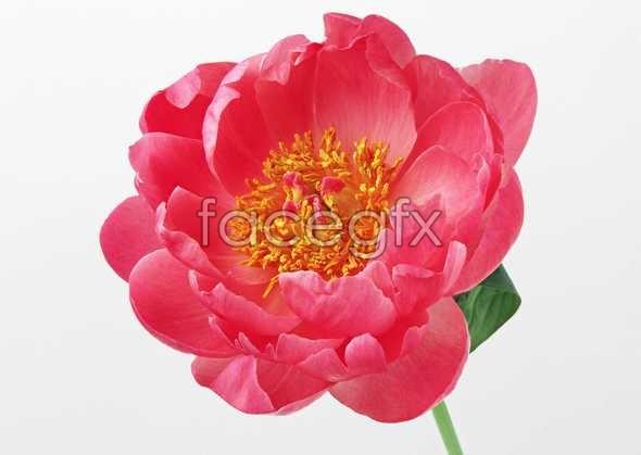 Flowers close-up 485