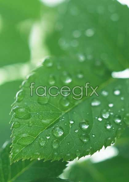 Flowers close-up 814