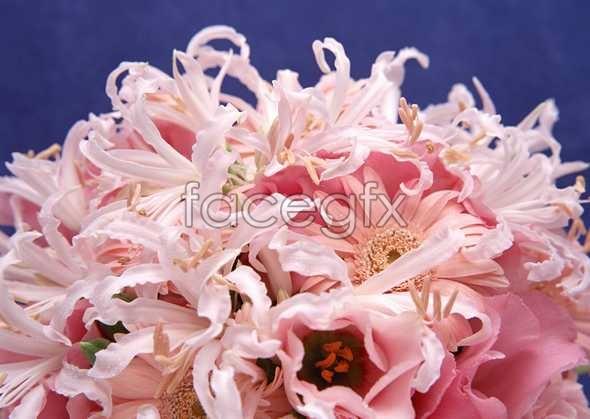 Flowers close-up 920
