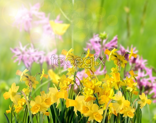 Fresh yellow flower pictures