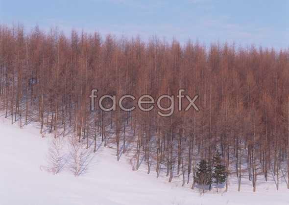Ice 457