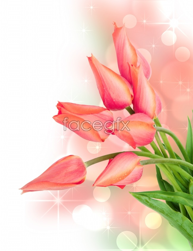 Romantic Pink Tulip picture