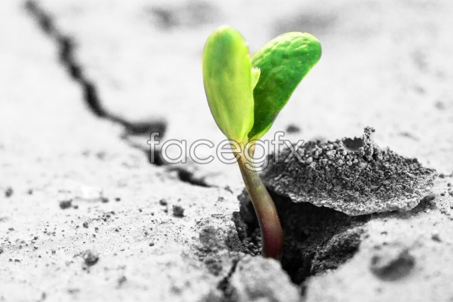 Sprouting seedling pictures