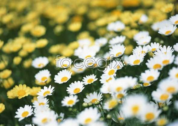 Thousands of flowers 554