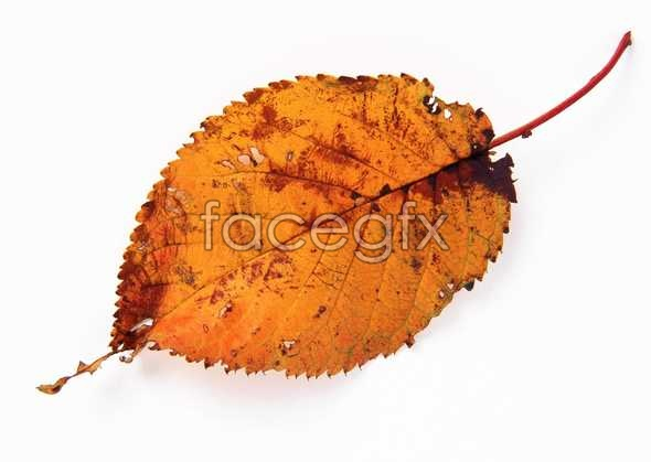 Yellow leaf pictures