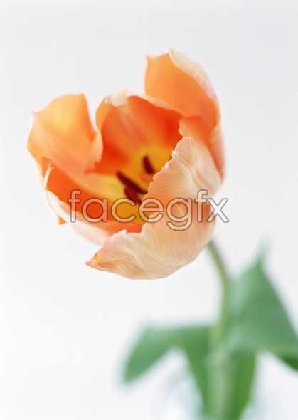 Flowers close-up 1327