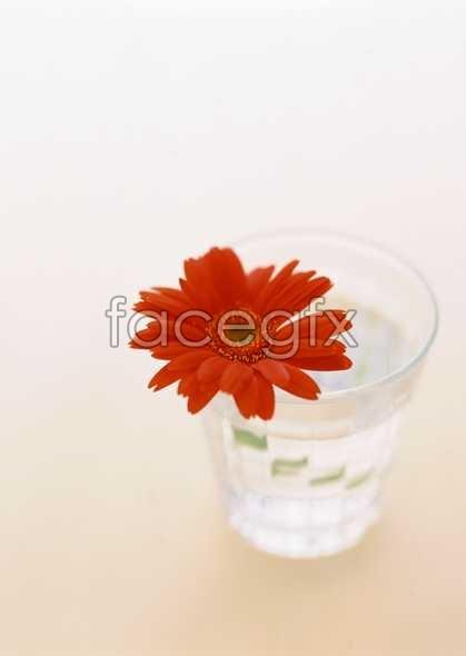 Flowers close-up 1771