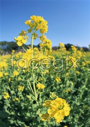Flowers close-up 2,099