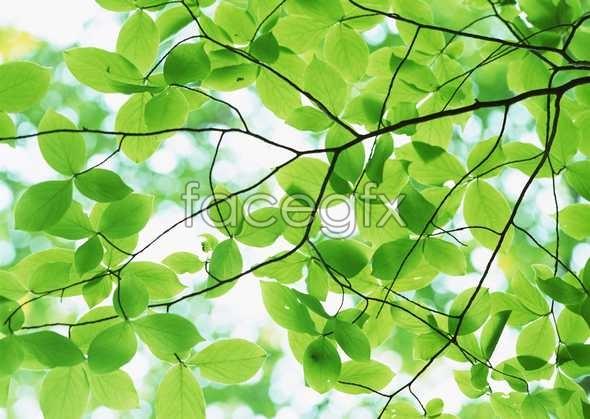 Flowers close-up 864