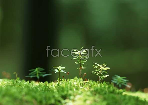 Flowers close-up 874