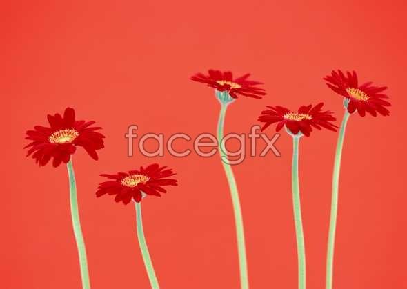 Flowers close-ups of 1635