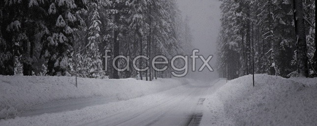 Forest road scenery picture