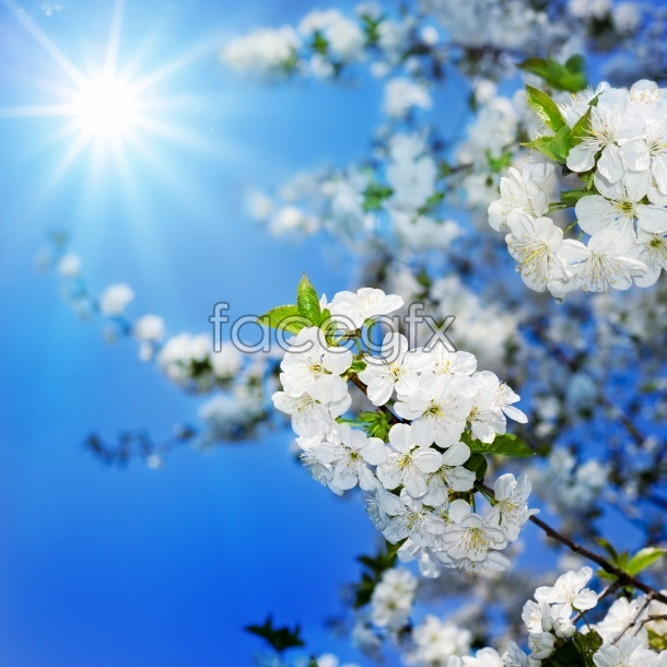 HD peach flowers pictures
