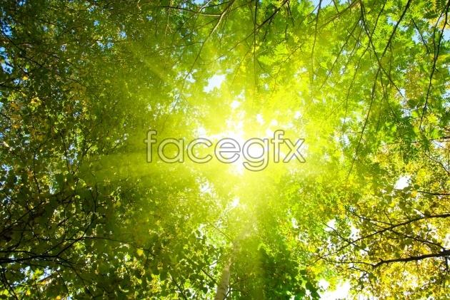 HD wood landscape picture