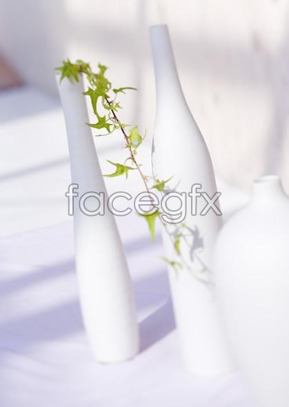 Indoor flower 53