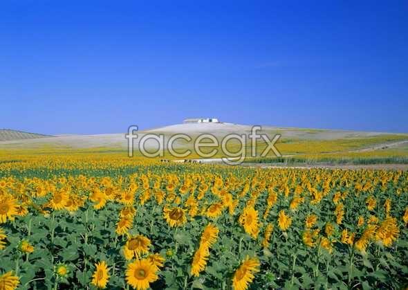 Thousand flower 309