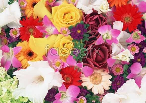 Flowers close-up 1033