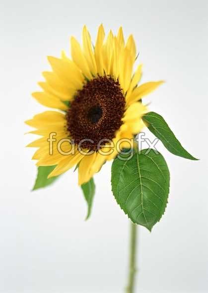 Flowers close-up 1384