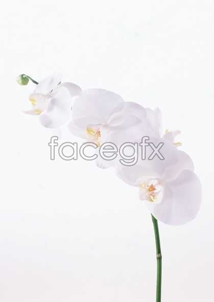 Flowers close-up 1638