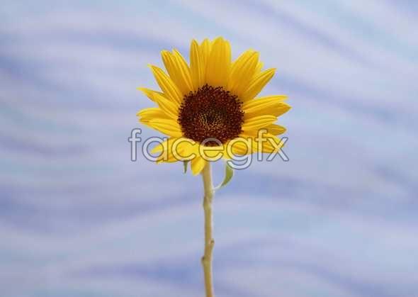 Flowers close-up 993