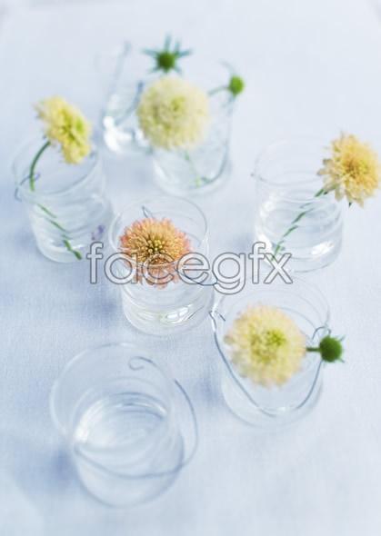 Indoor flower 58