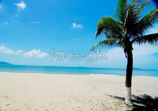 Beach landscape pictures