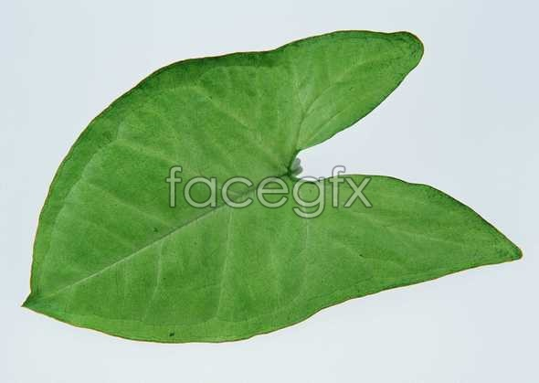 Concave leaves pictures