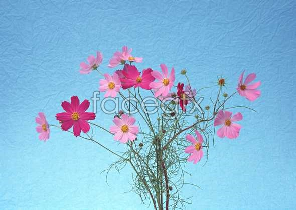 Flowers close-up 1021