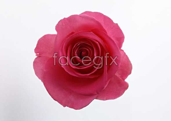 Flowers close-up 1425