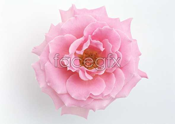 Flowers close-up 1442