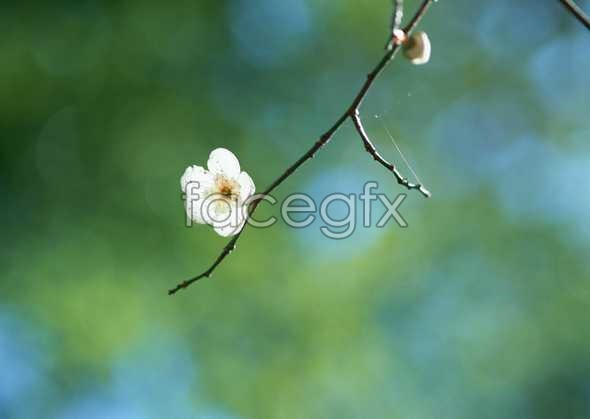 Flowers close-up 1577