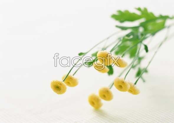 Flowers close-up 1742