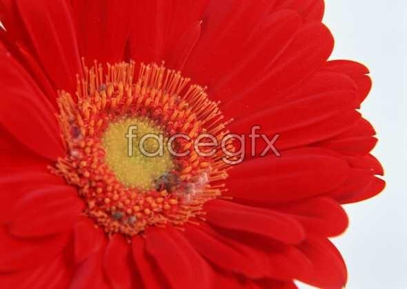 Flowers close-up 177