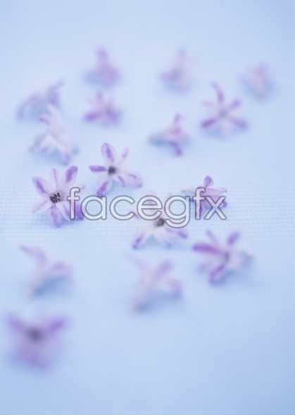Flowers close-up 1803